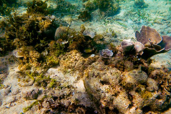 Filipiny_Palawan_Puerto_Princesa_Honda_Bay_snorkeling, P1000054