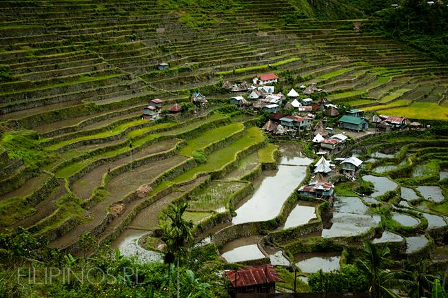 Filipiny_Ifugao_Batad_pola ryżowe, DSC_1851