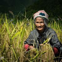 Filipiny_Hapao_pola_ryżowe, DSC_0002