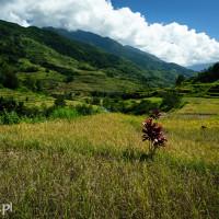 Filipiny_Hapao_pola_ryżowe, DSC_0054