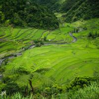 Filipiny_Bangaan_tarasy_ryżowe, DSC_0165