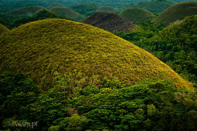Filipiny_Bohol_Czekoladowe_Wzgórza, DSC_5720