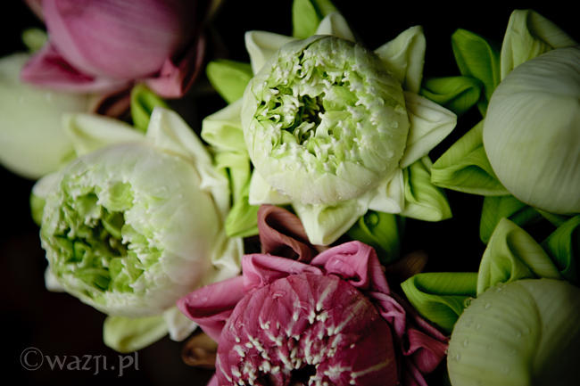Tajlandia, Chiang Mai. Kwiaty lotosu, DSC_8700