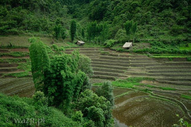 Tajlandia_pola_ryżowe, DSC_9034