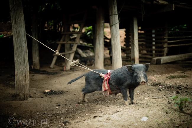 Tajlandia_wioski_Karenów, DSC_9199