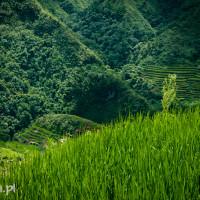 Filipiny_Batad_pola_ryżowe, DSC_9550