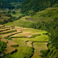 Filipiny_Hapao_tarasy_ryżowe, DSC_9972