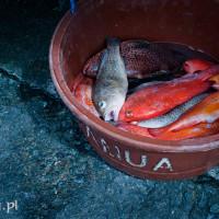 Filipiny_dampa_owoce_morza_rybki, DSC_4380