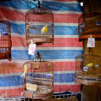 Hong_Kong_Bird_Market, DSC_4844