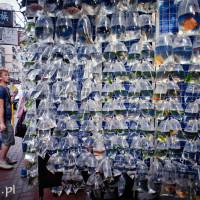 Hong_Kong_Goldfish_Market, DSC_4960