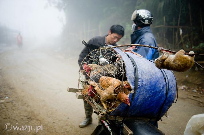 Wietnam_loris, DSC_4110