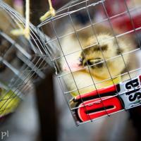 Filipiny_Manila_chinski_nowy_rok, DSC_1017