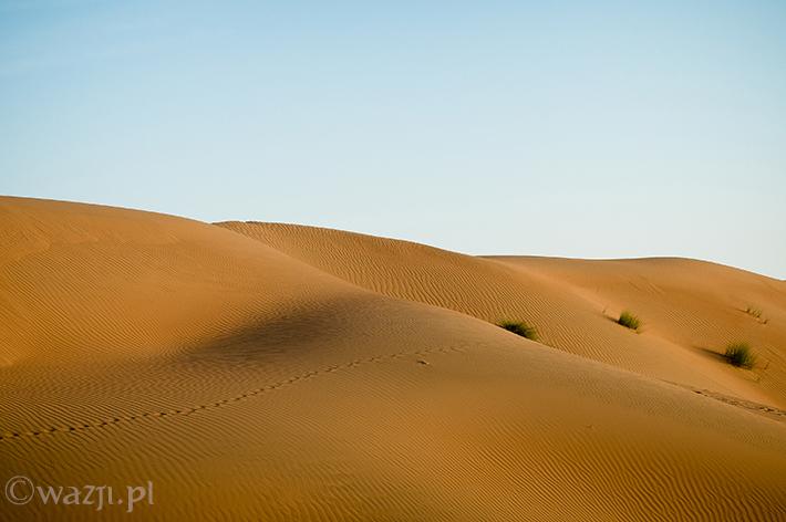 Oman_Wahiba_Sands_pustynia, DSC_8626