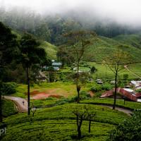 Sri_Lanka_zdjecia_plantacje_herbaty_Nuwara_Eliya, DSC_3928