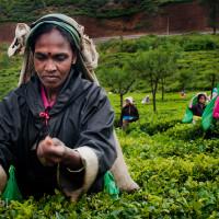 Sri_Lanka_zdjecia_plantacje_herbaty_Nuwara_Eliya, DSC_3954