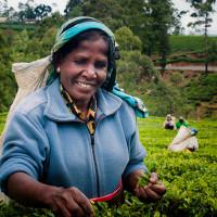 Sri_Lanka_zdjecia_plantacje_herbaty_Nuwara_Eliya, DSC_3956