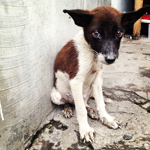 Filipiny_pies, IMG_2246