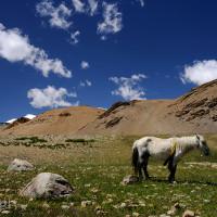 Indie_Ladakh_Tso_Moriri, DSC_4702