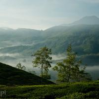 Indie_Kerala_Munnar_plantacje_herbaty, DSC_3525