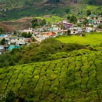 Indie_Kerala_Munnar_plantacje_herbaty, DSC_3820