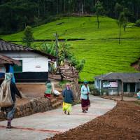 Indie_Kerala_Munnar_plantacje_herbaty_ludzie, DSC_3920
