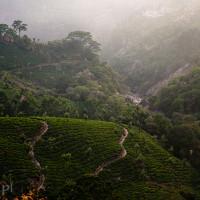 Indie_Kerala_Munnar_plantacje_herbaty, DSC_3982