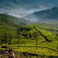 Indie_Kerala_Munnar_plantacje_herbaty, DSC_4216