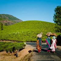 Indie_Kerala_Munnar_plantacje_herbaty_ludzie, DSC_4350