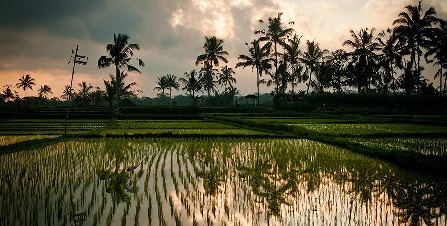 [priv] Bali Post
