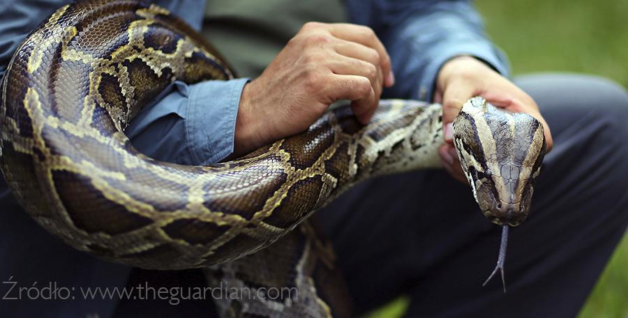 [Bali]: Zaklinacz węży
