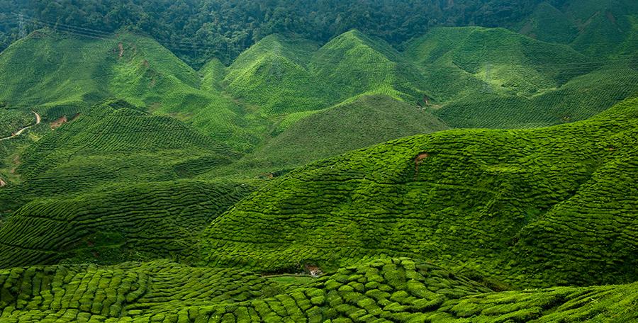 [foto]: Cameron Highlands – malezyjskie plantacje herbaty