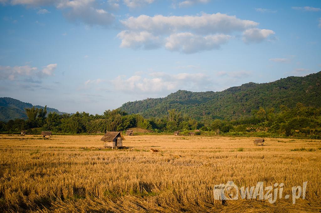 Okolice Luang Nam Tha na północy Laosu.
