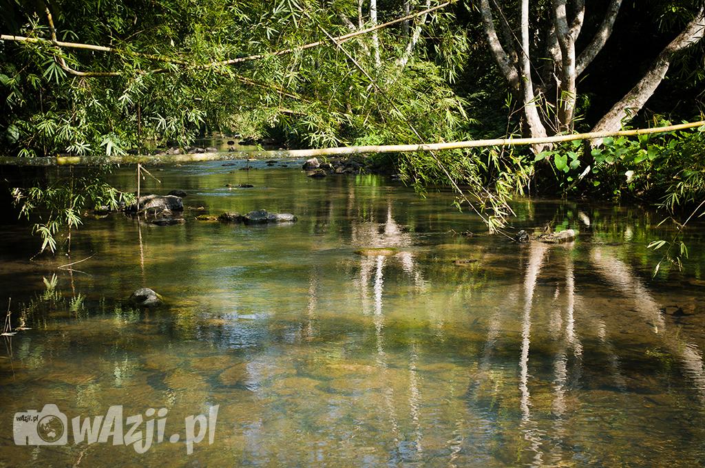 Dżungla w okolicach Luang Nam Tha.