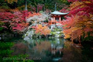 Kōyō, czyli kolory japońskiej jesieni 🍁🍂🍁🍂 [DUŻE ZDJĘCIA]