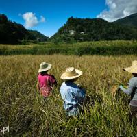 Filipiny_Hapao_pola_ryżowe, DSC_0030