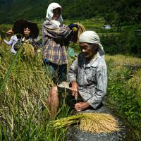 Filipiny_Hapao_pola_ryżowe, DSC_0037