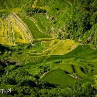 Filipiny_Batad_pola ryżowe, DSC_9502