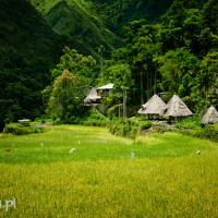 Filipiny_Batad_pola ryżowe, DSC_9695