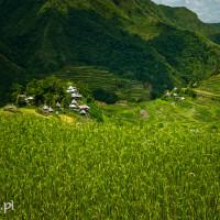 Filipiny_Batad_pola ryżowe, DSC_9808