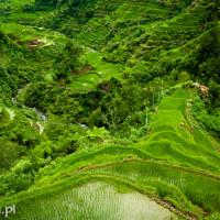 Filipiny_Banaue_tarasy_ryżowe, DSC_9878
