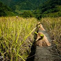 Filipiny_Hapao_tarasy_ryżowe, DSC_9999