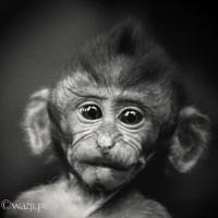 Bali 2008. Makaki z Monkey Forest w Ubud bywają całkiem sympatyczne.