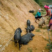Vietnam_Coc_Ly_market, DSC_1351