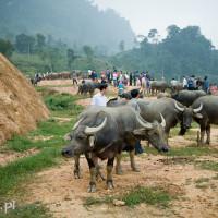 Vietnam_Coc_Ly_market, DSC_1356