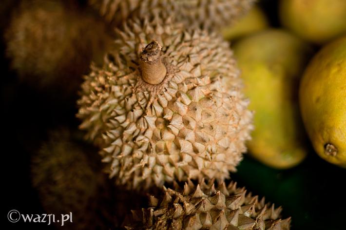 Król Durian Zybuczkowiec