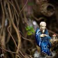 Wietnam_Hanoi_swiatynia_literatury, DSC_5077