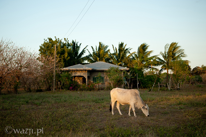 Filipiny_Ilocos_Norte_Paoay_wydmy, DSC_6201