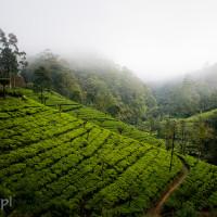 Sri_Lanka_zdjecia_plantacje_herbaty_Nuwara_Eliya, DSC_3927