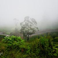 Sri_Lanka_zdjecia_plantacje_herbaty_Nuwara_Eliya, DSC_3940