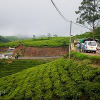 Sri_Lanka_zdjecia_plantacje_herbaty_Nuwara_Eliya, DSC_3942